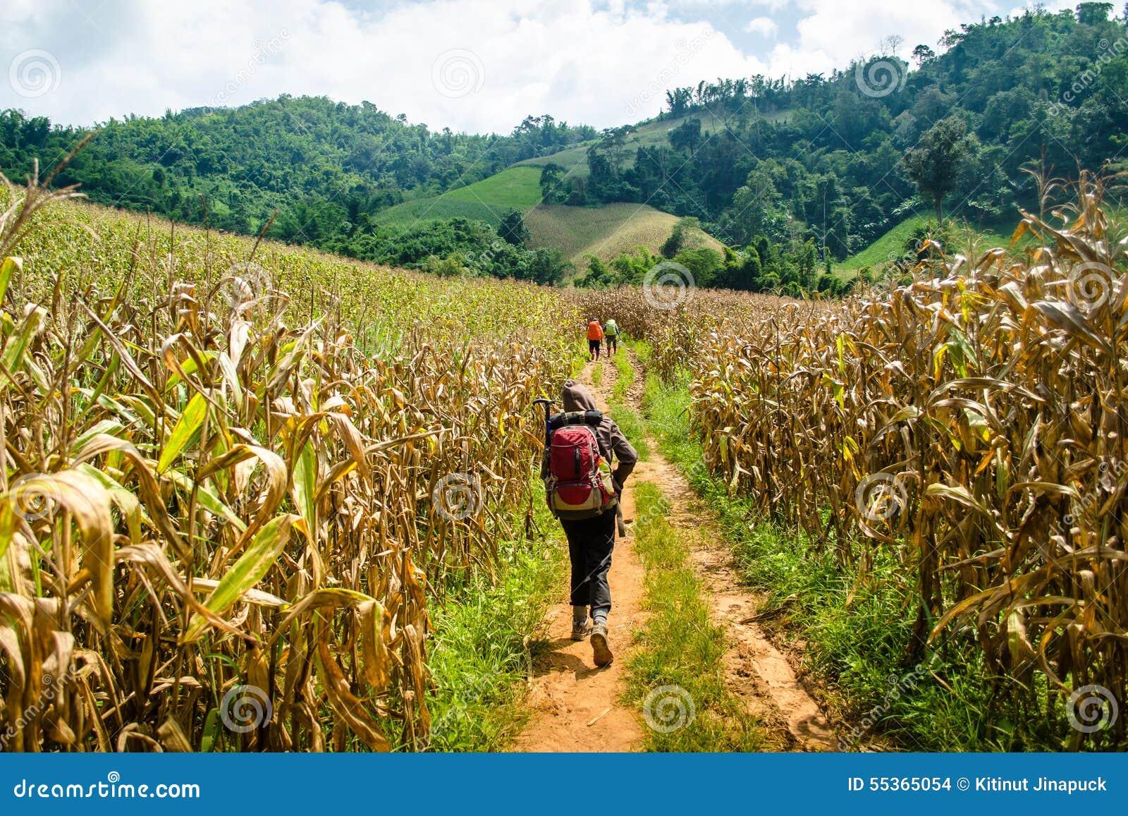 Trekking nel più forrest