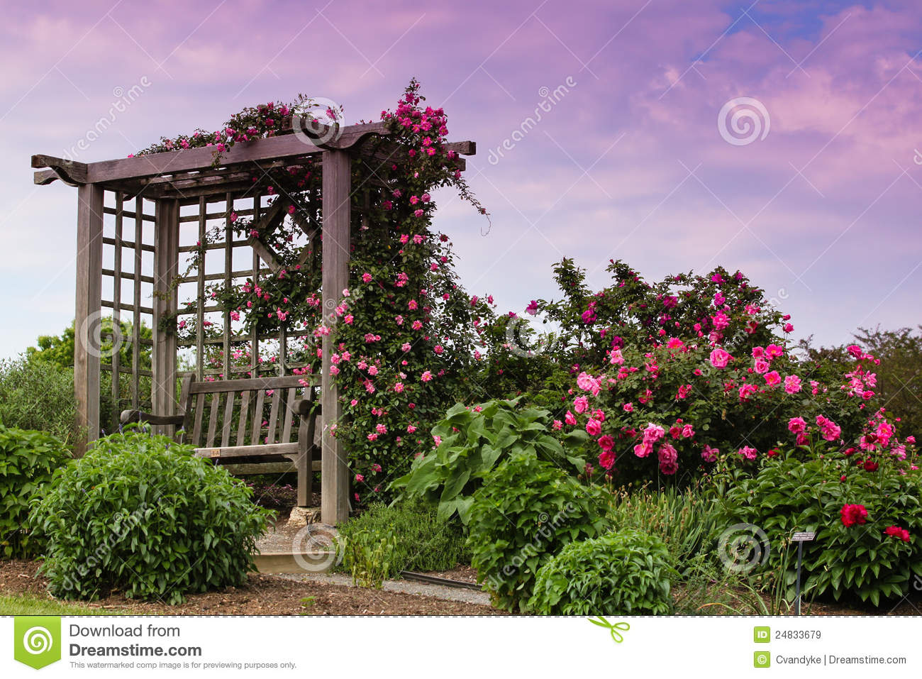 Trellis Blooming Pink Roses Garden Landscape Royalty Free ...