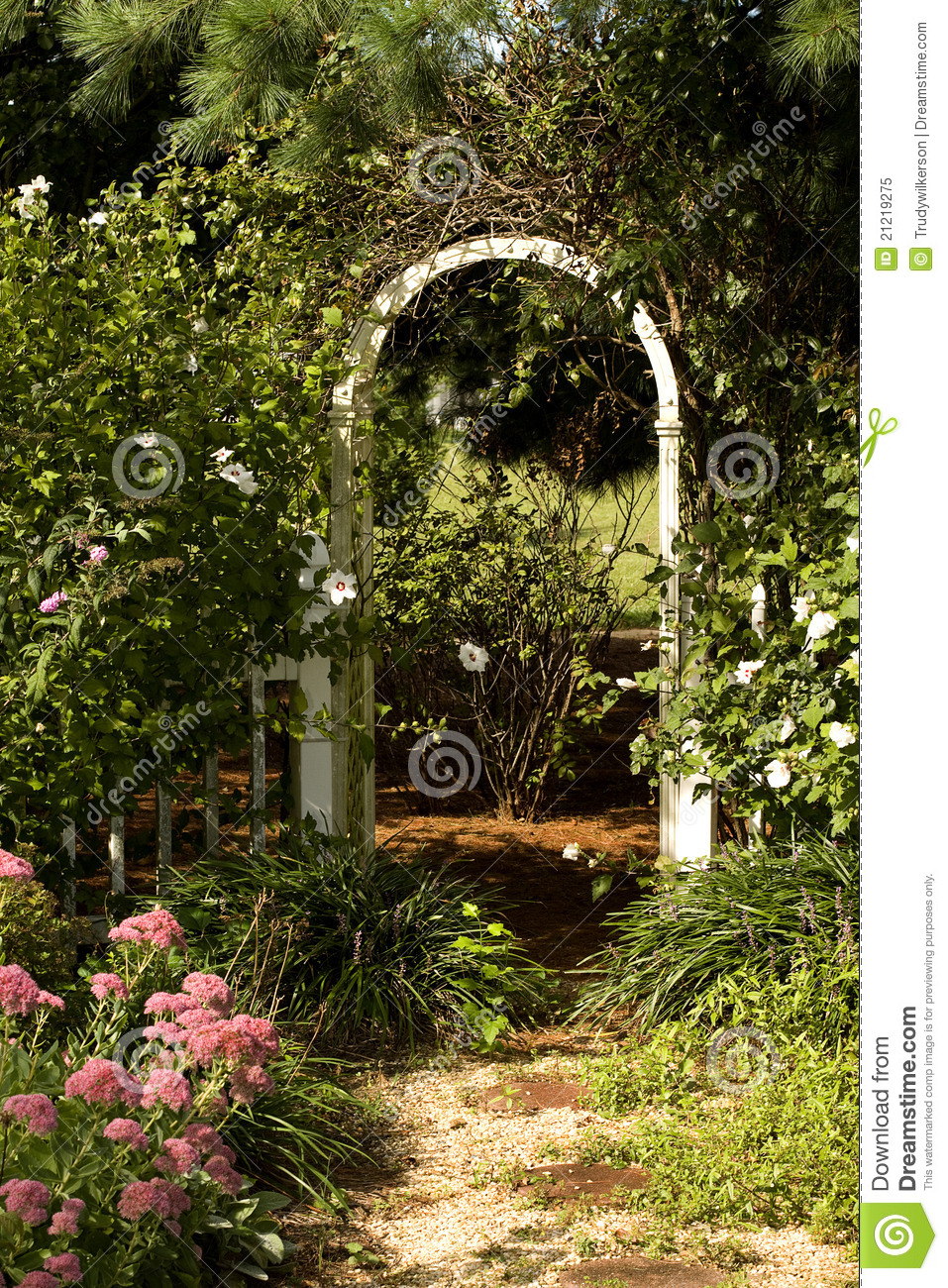 Trells in Morning Sun stock image. Image of trellis, pathway - 21219275