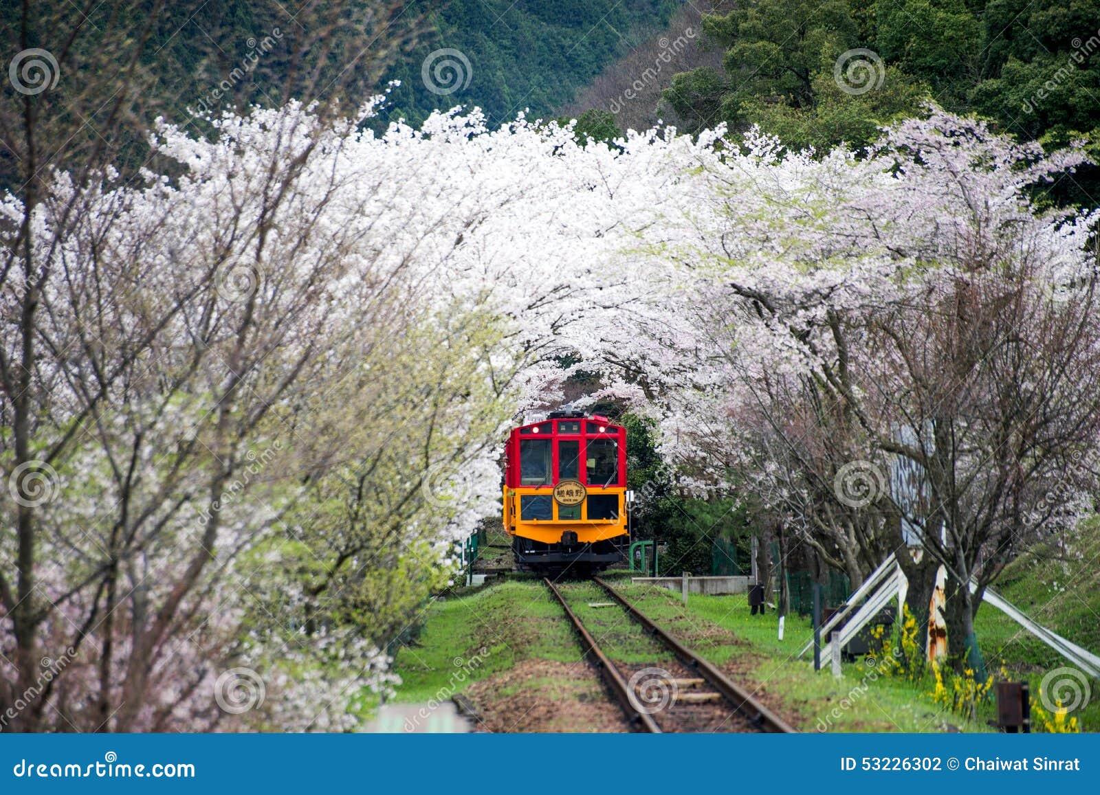 Tren escénico con el flor de Sakura