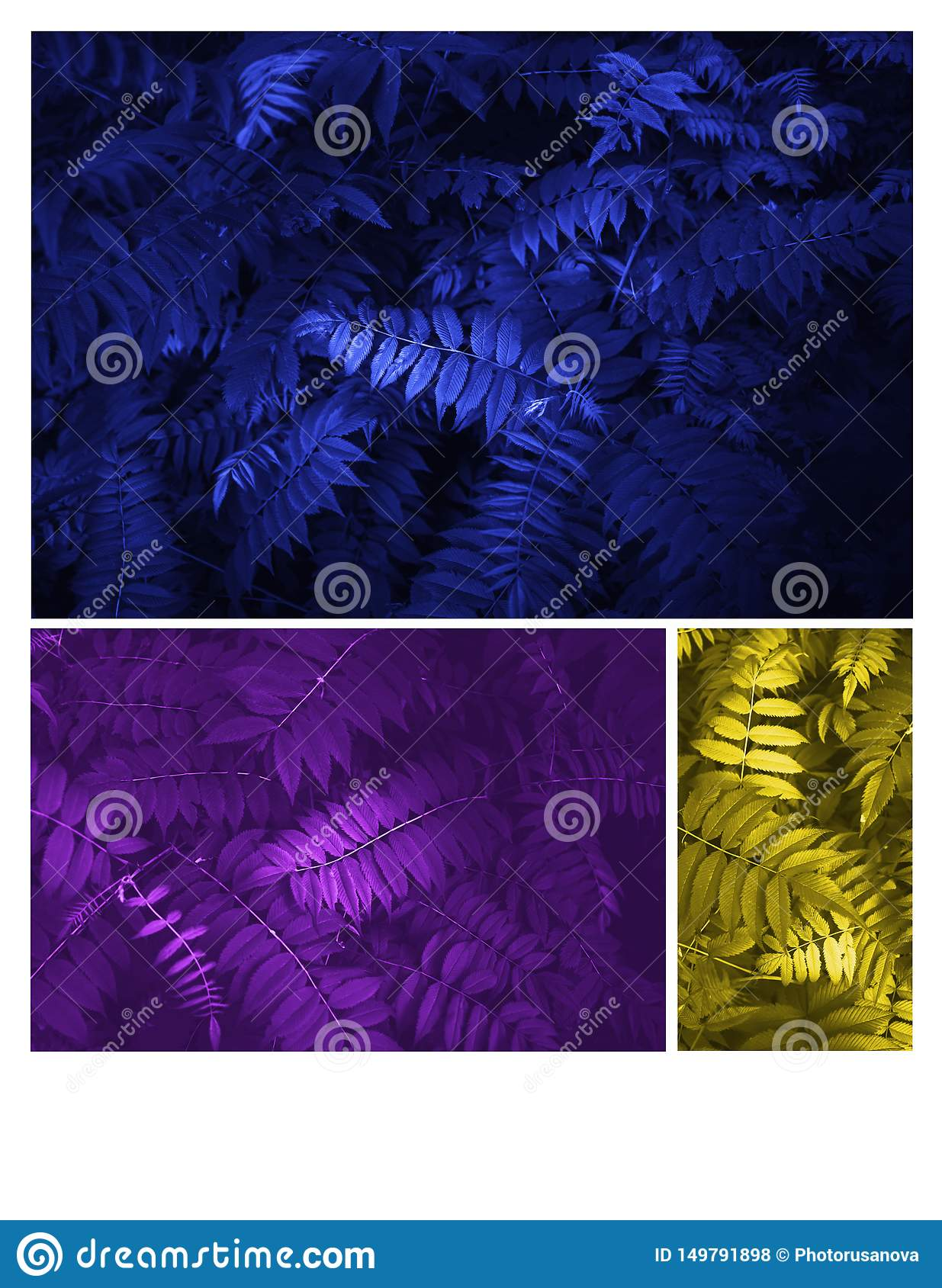 Glowing blue, yellow and purple leaves Pattern Beautiful Tropical