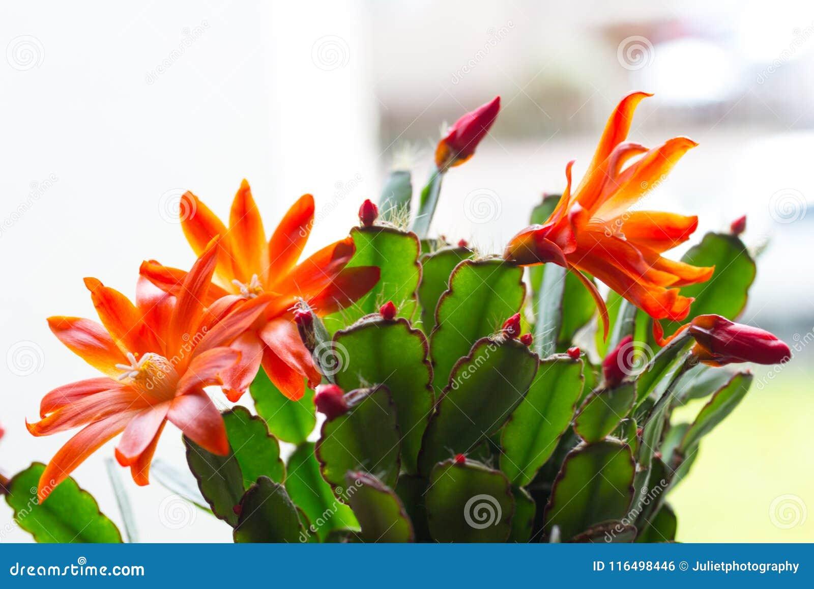 Trendy cactus on window sill, close up shot