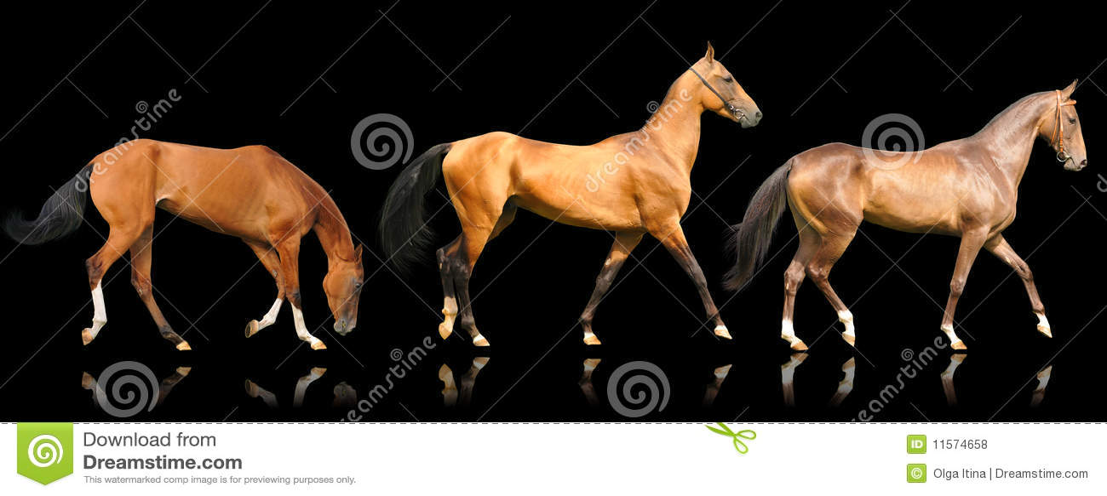 Tres caballos del akhal-teke aislados en negro