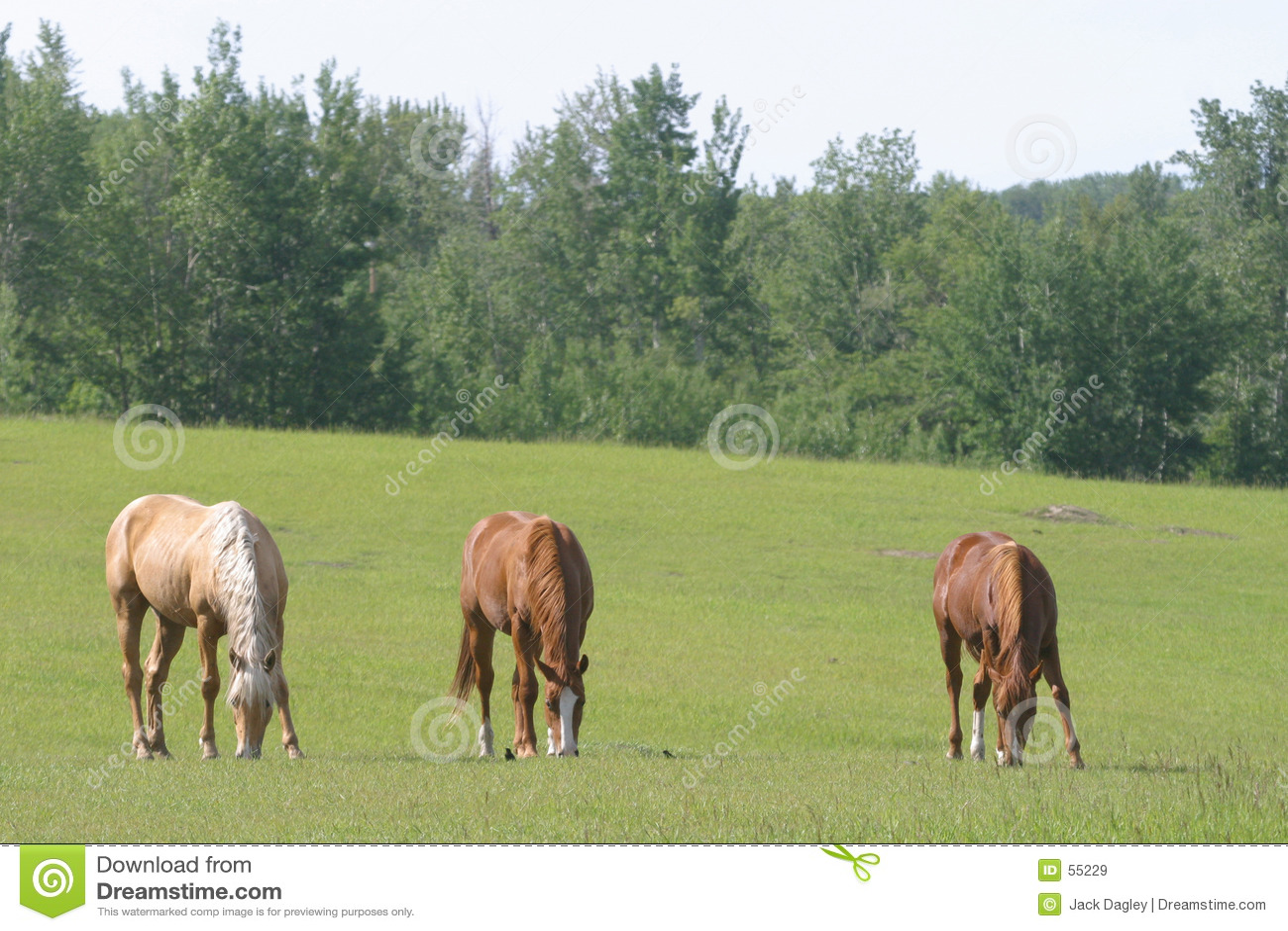 Tres caballos que pastan
