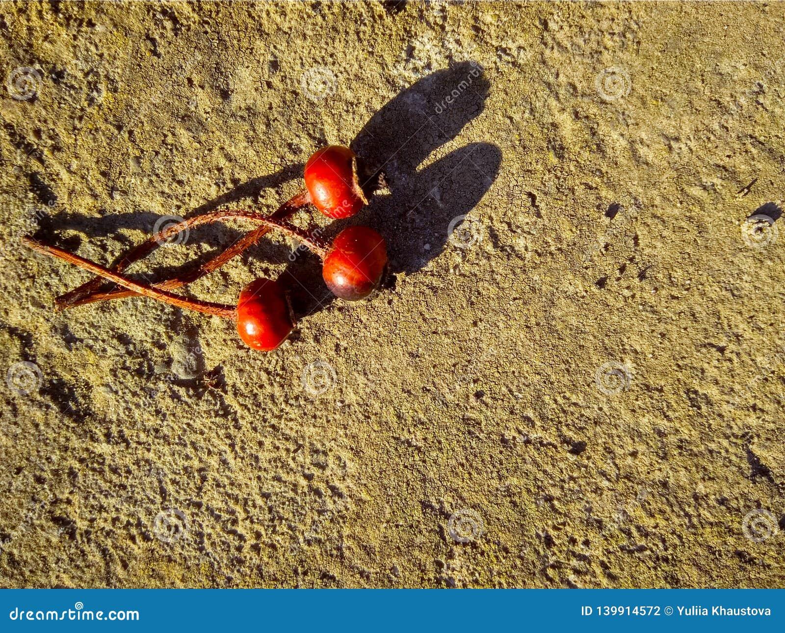 Tres escaramujos secos rojos en el hormigón