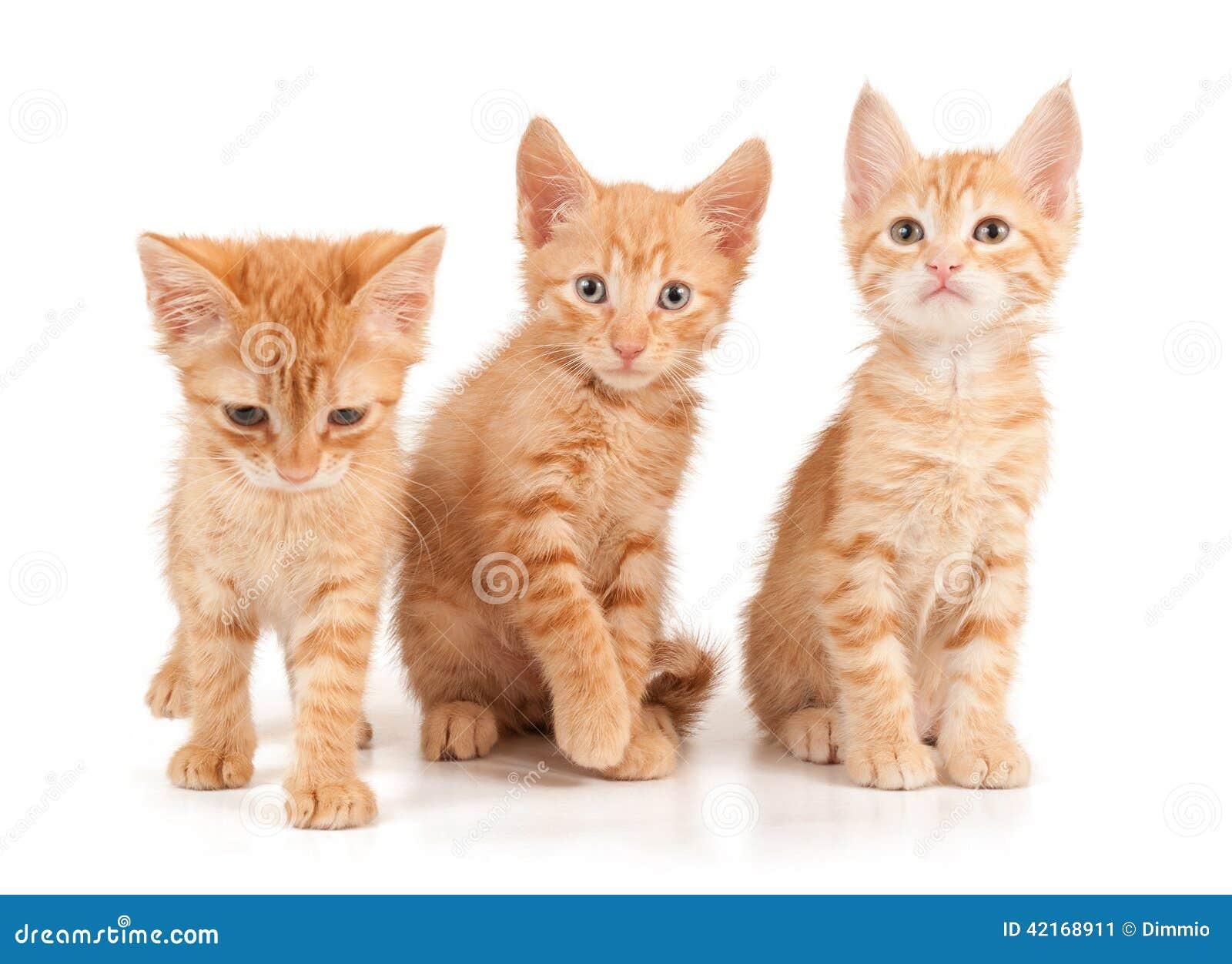 Tres gatitos rojos