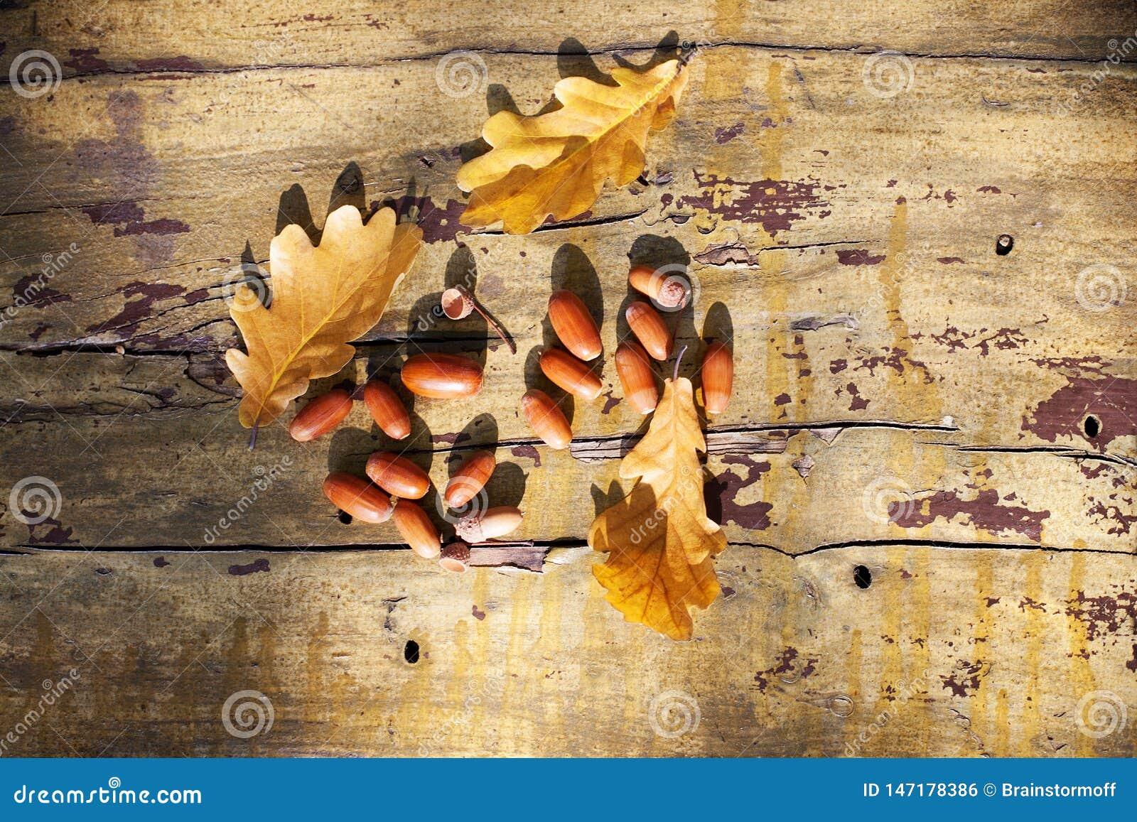 Tres hojas amarillas caidas del roble y bellotas rojas en viejo cierre del fondo del tablero de madera para arriba, follaje de or