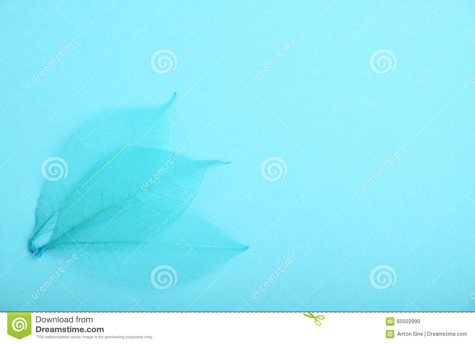 Tres hojas del esqueleto del azul en el papel del diseño