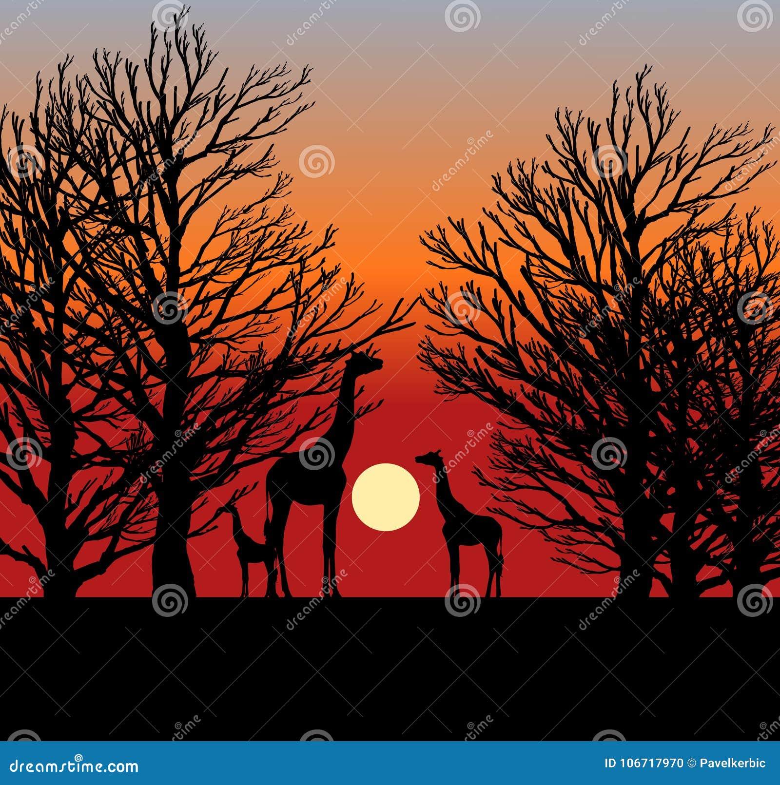 Tres jirafas en la puesta del sol en África