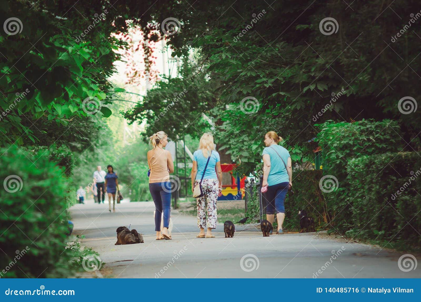 Tres mujeres están caminando con los perros en el parque de la ciudad por la mañana