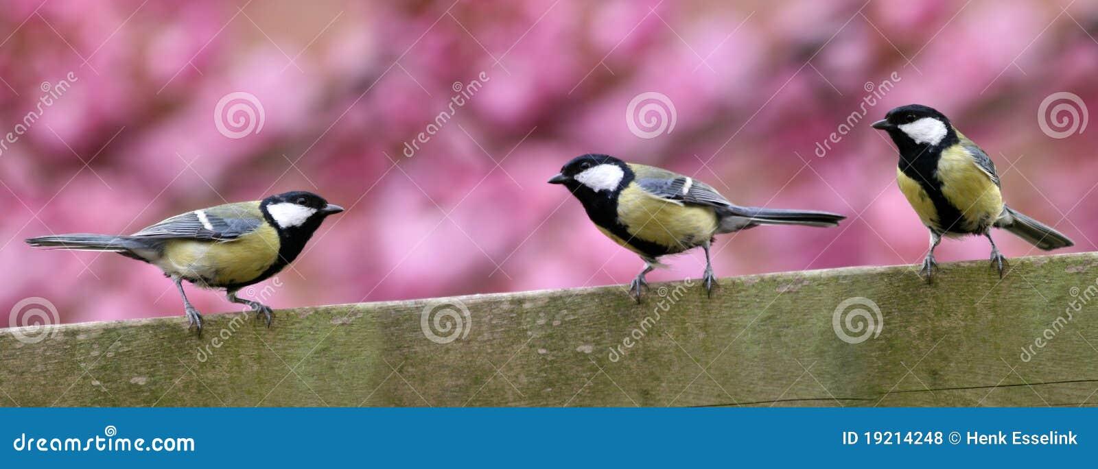Tres pájaros del jardín en la cerca