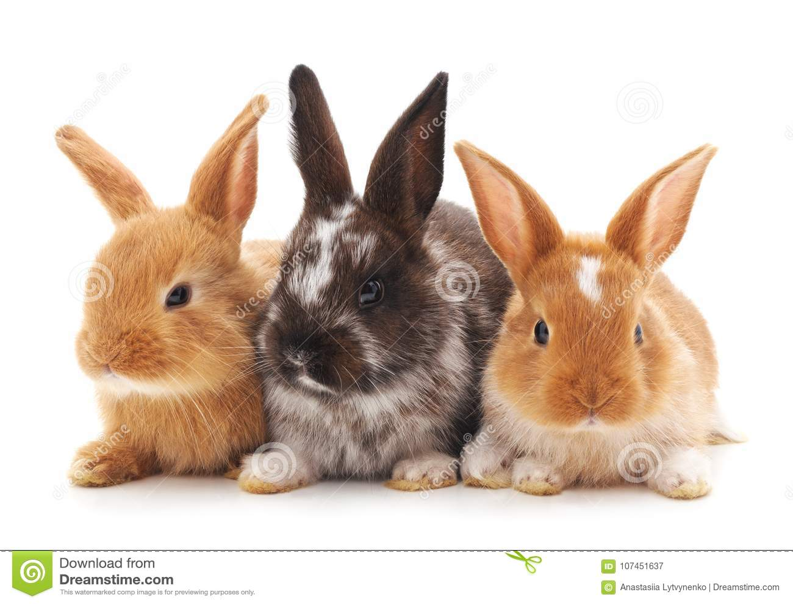 Tres pequeños conejos