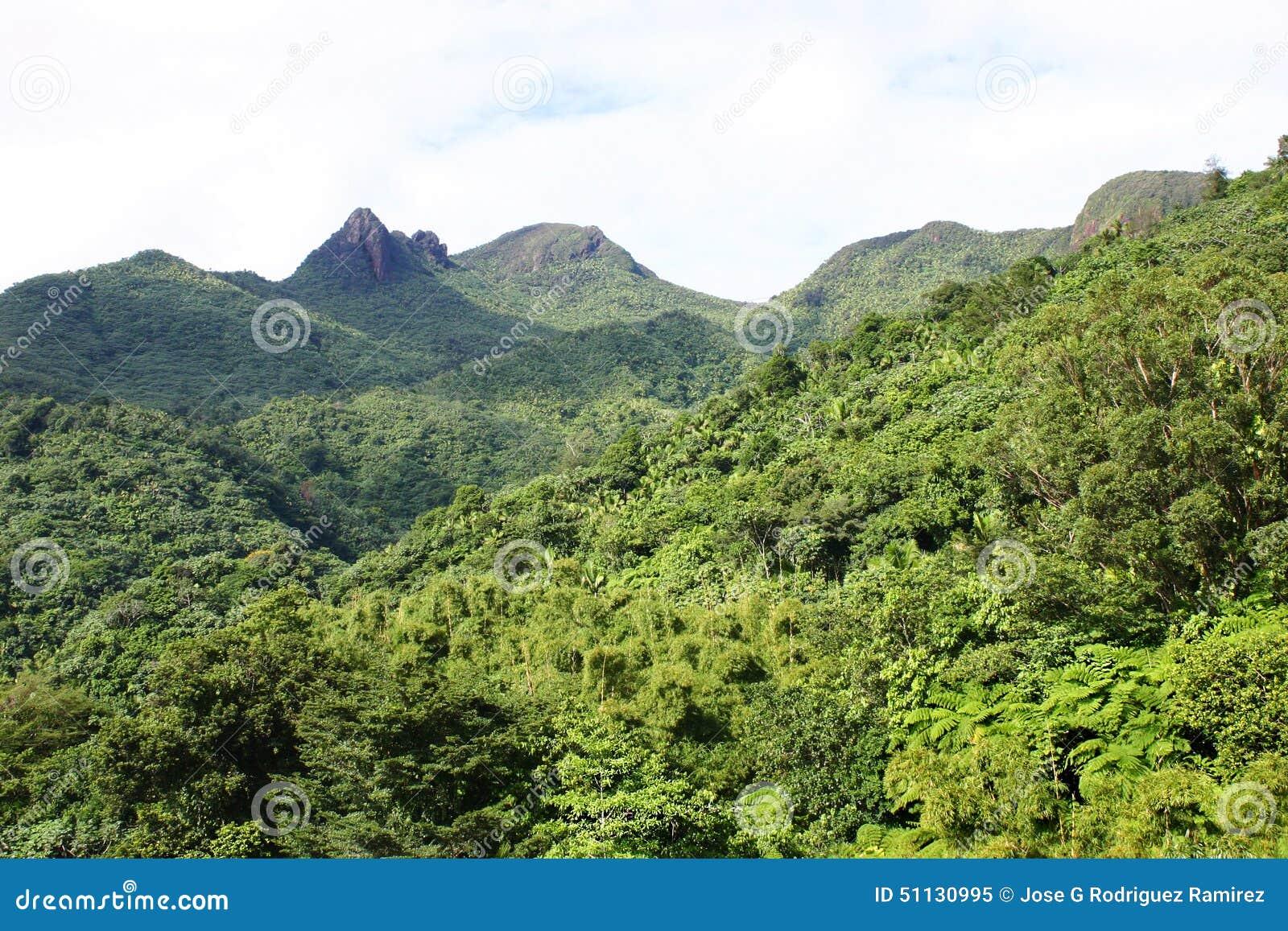 Tres picachos at el yunque national forest stock photo for Bano de oro el yunque