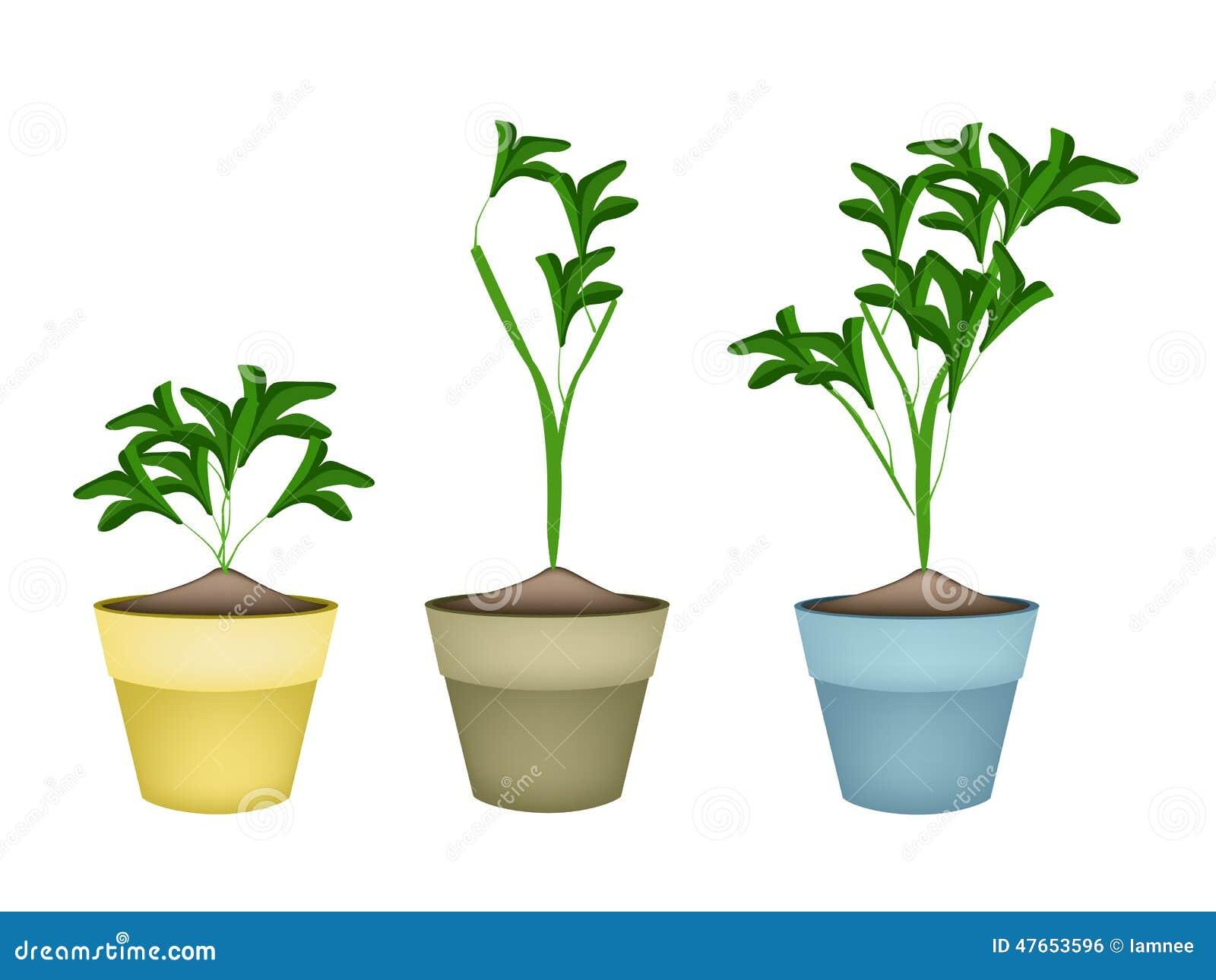 tres plantas ornamentales en macetas de cer mica