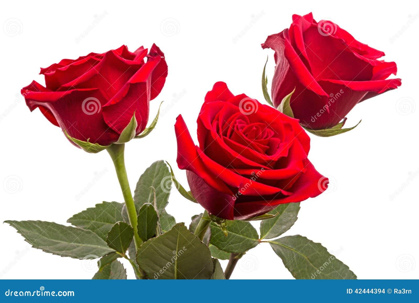 Tres rosas rojas en blanco