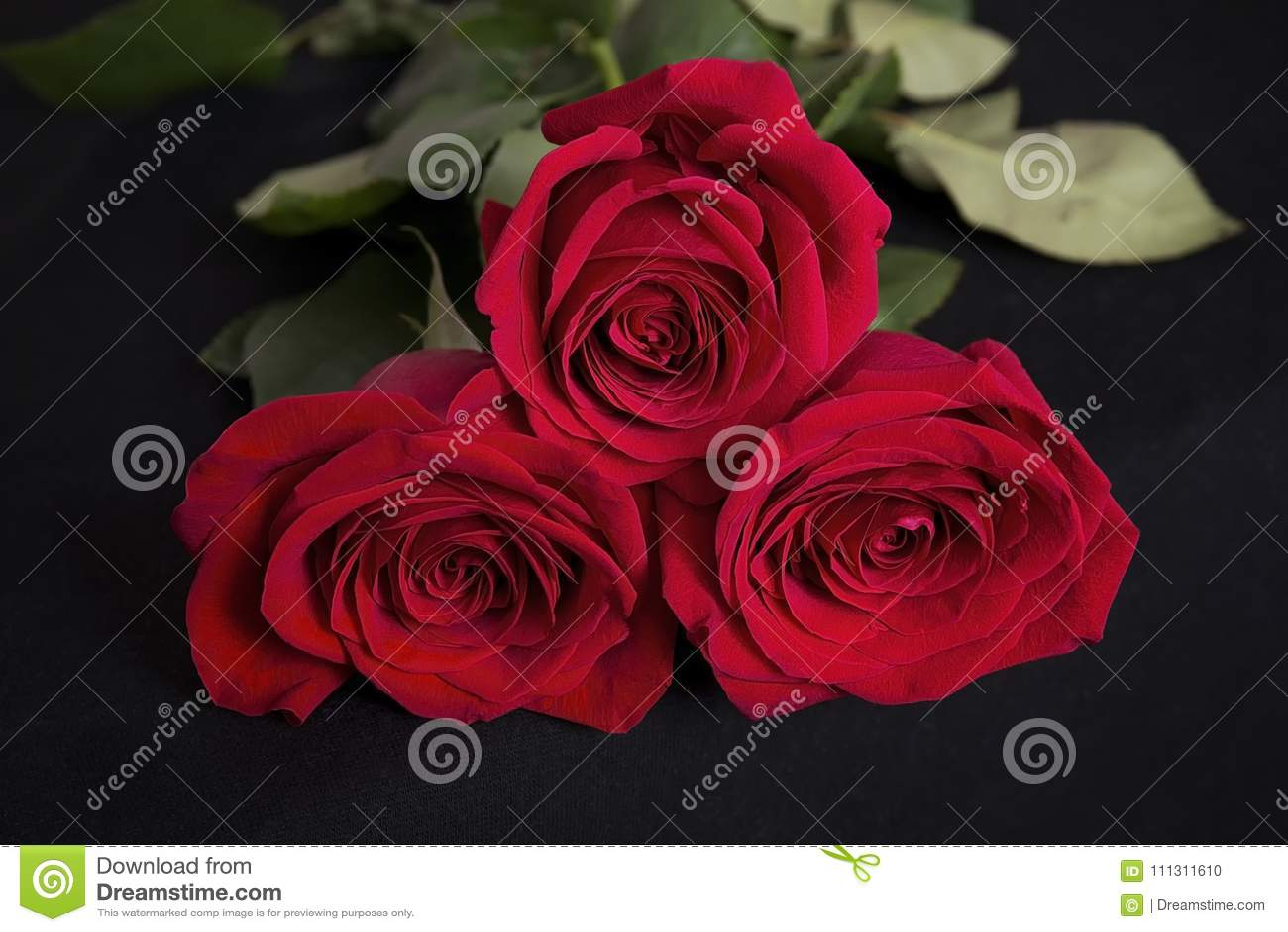 22b15b82a305 Tres Rosas Rojas En Fondo Negro Foto de archivo - Imagen de belleza ...
