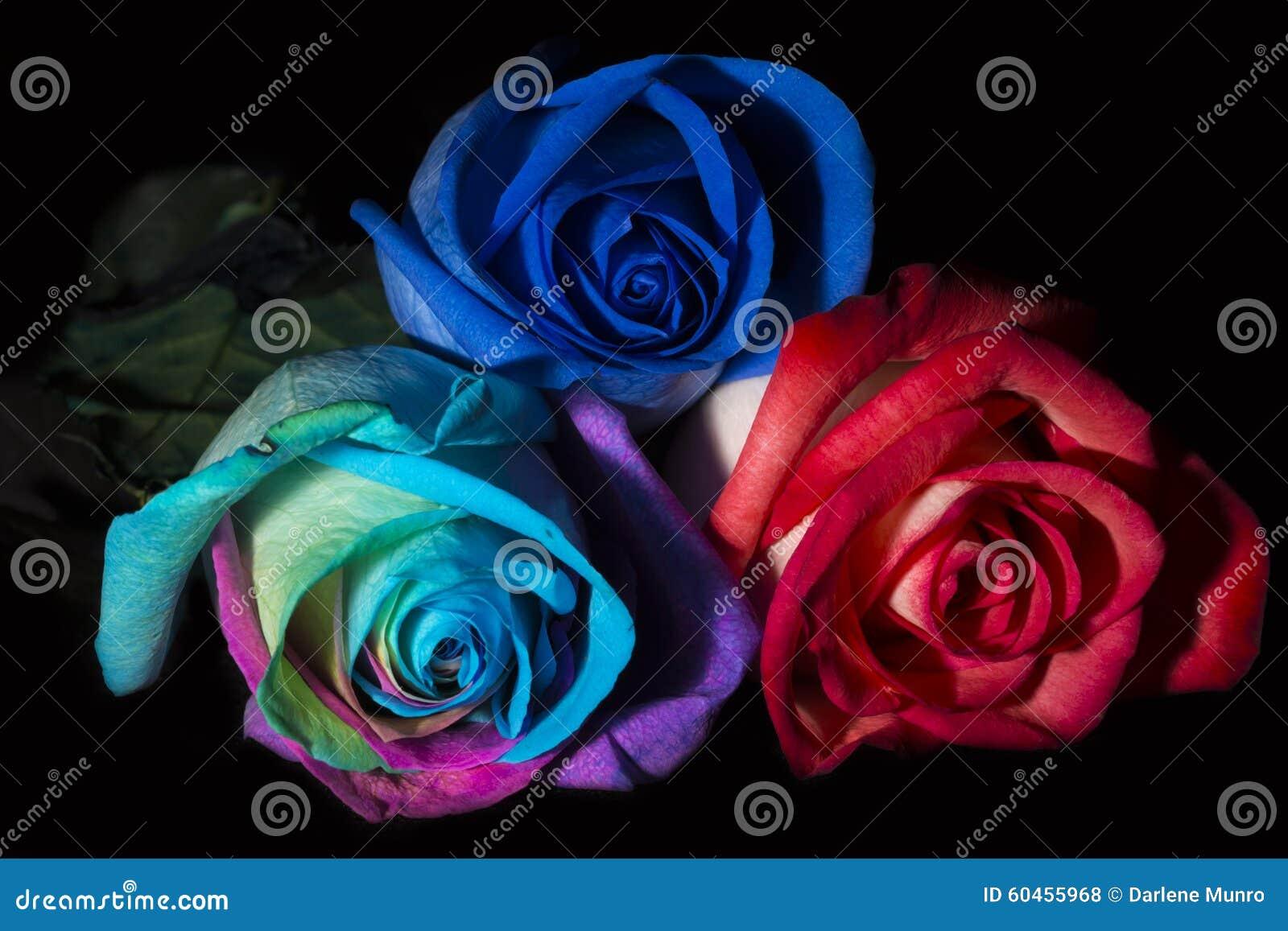 Tres Rosas Tres Colores Foto De Archivo Imagen De Amor 60455968