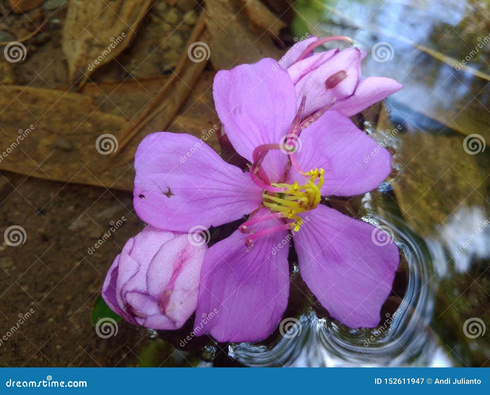 Trevlig blomma i vattnet