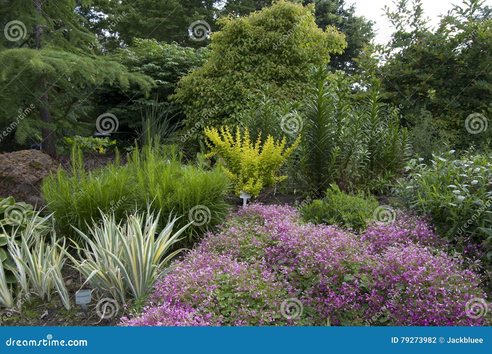 Trevlig botanisk trädgård