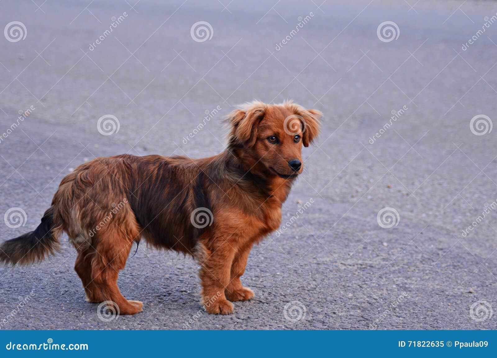 Trevlig hund
