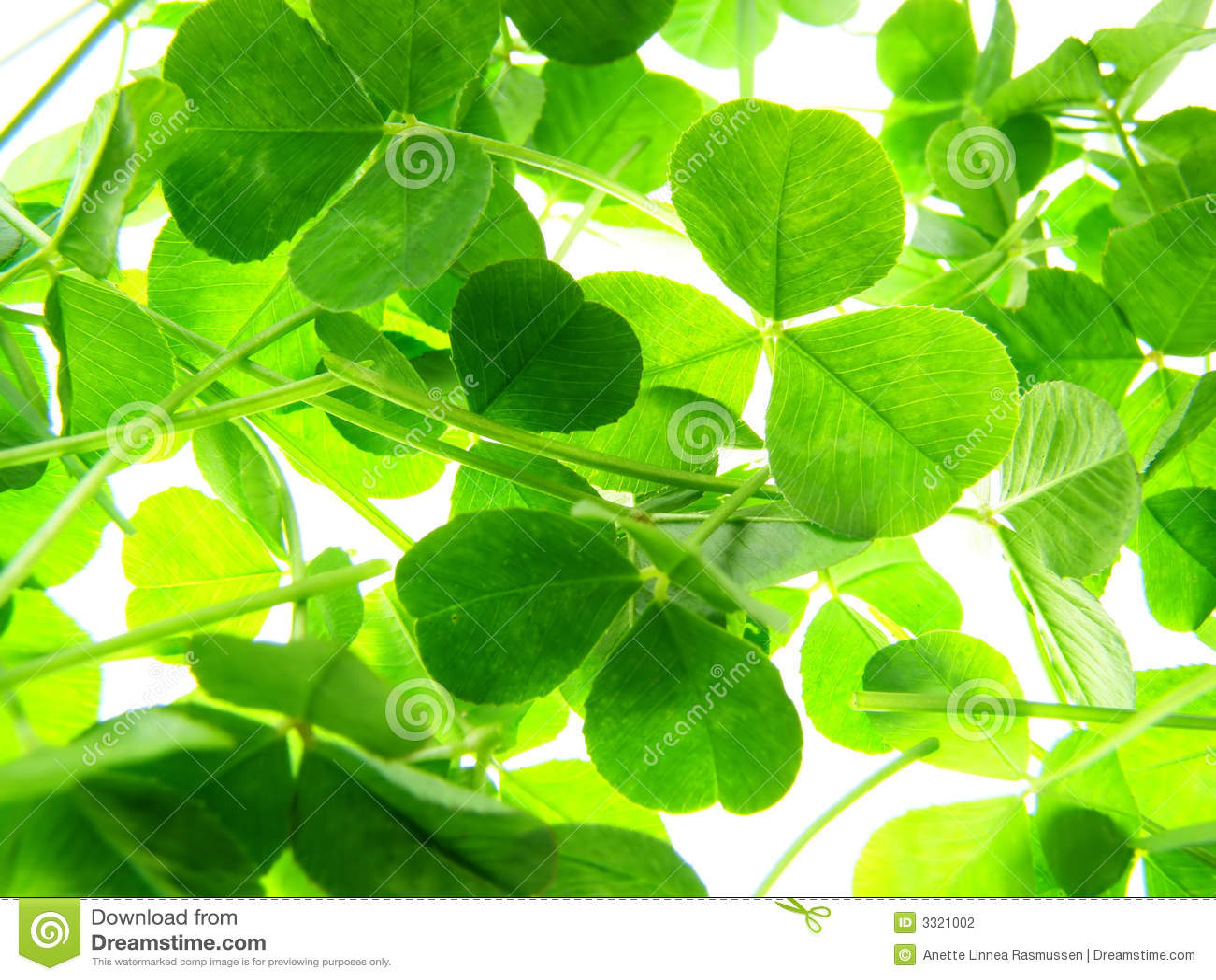 Trevo verde