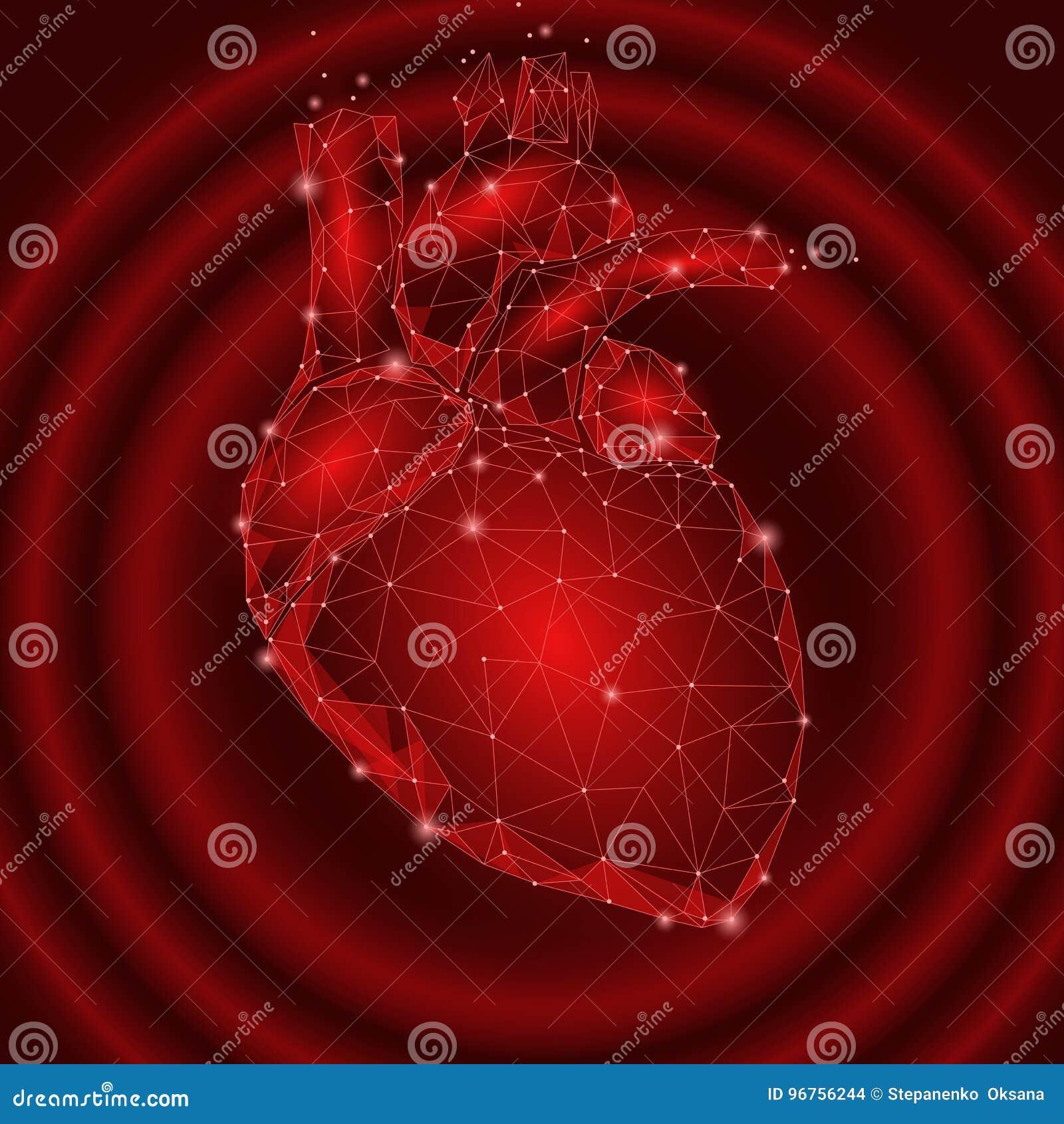 Triángulo Humano Del órgano Interno De Los Golpes De Corazón Bajo ...