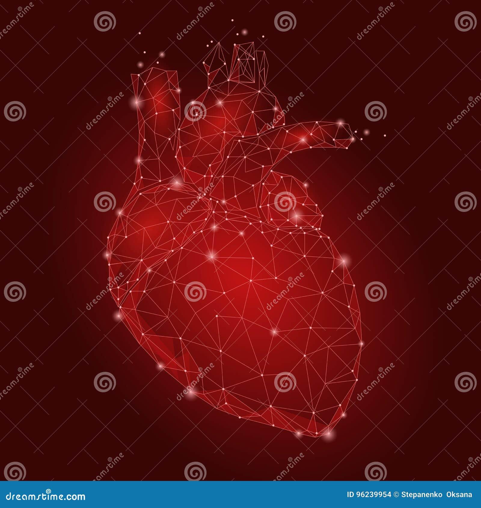 Triángulo Humano Del órgano Interno Del Corazón Bajo Polivinílico ...