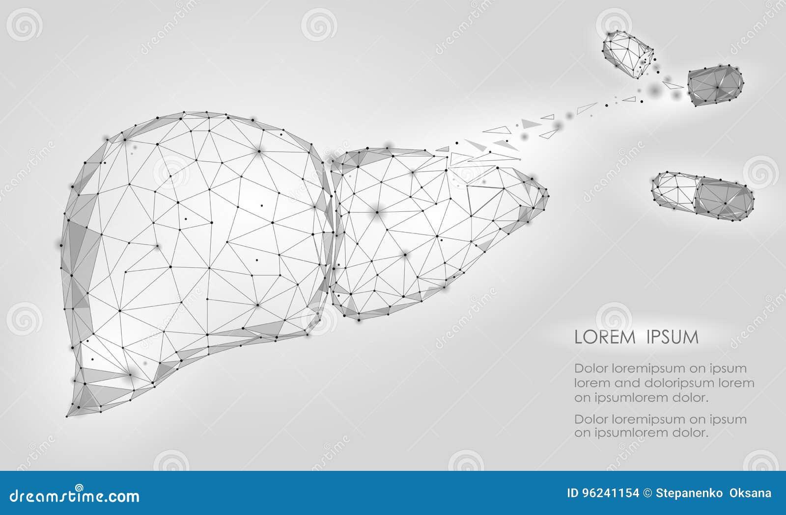 Triángulo Humano Del órgano Interno Del Hígado Del Decaimiento De La ...