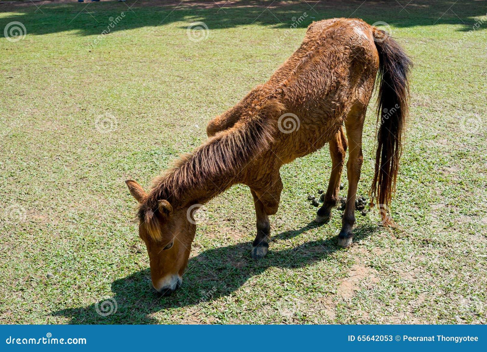 Tri jambes de cheval