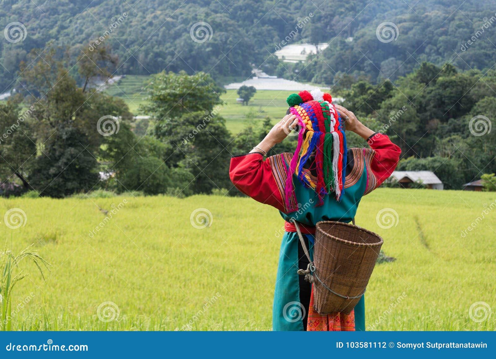 Tribu heureuse de colline dans la robe colorée de costume de gisement de riz non-décortiqué