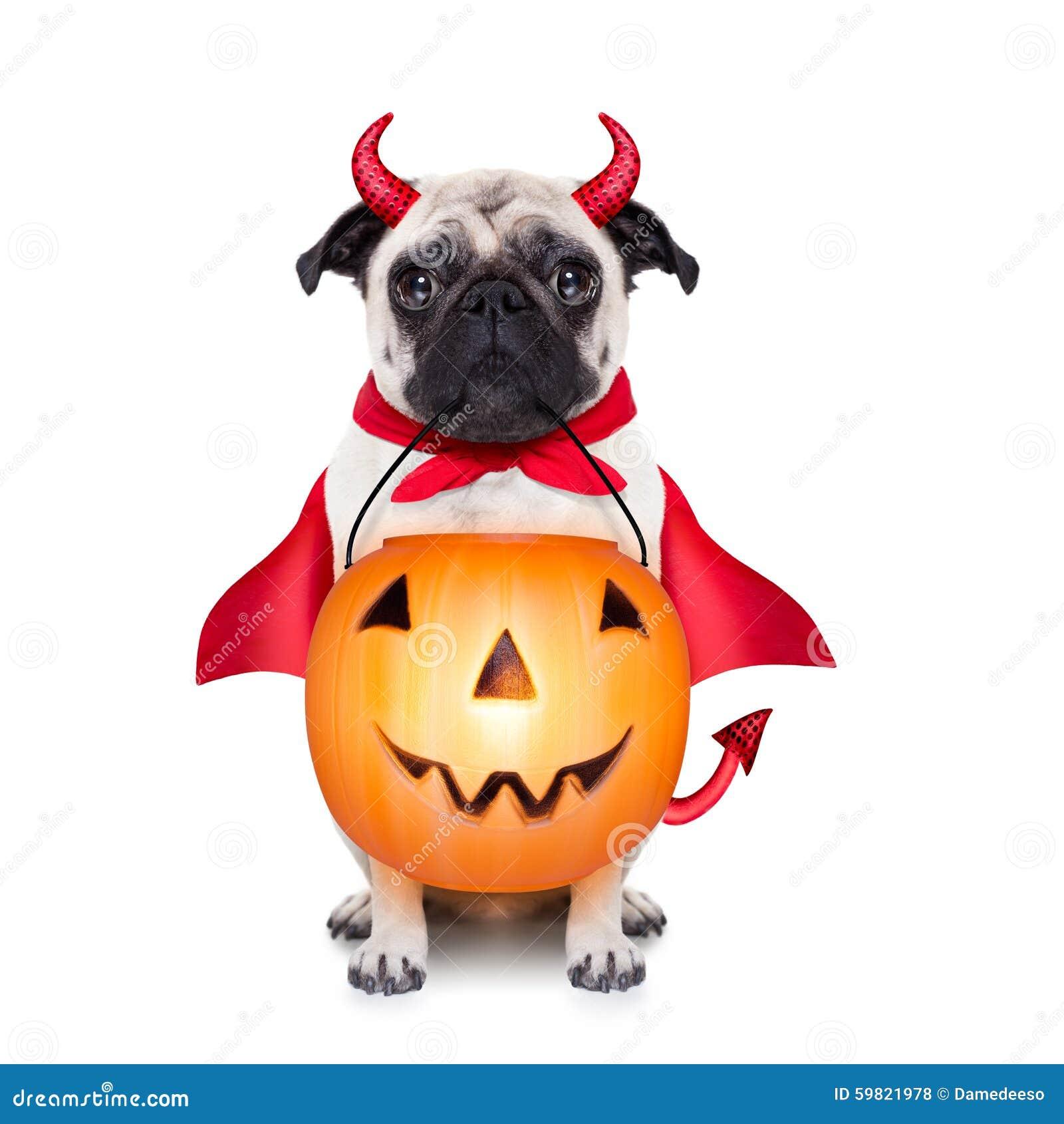 Trick- eller festhund