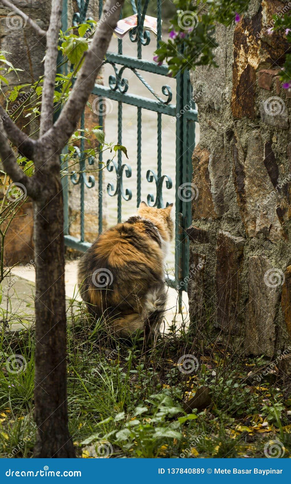 Tricolor кот увиденный от задних взглядов через дверь сада бросания утюга