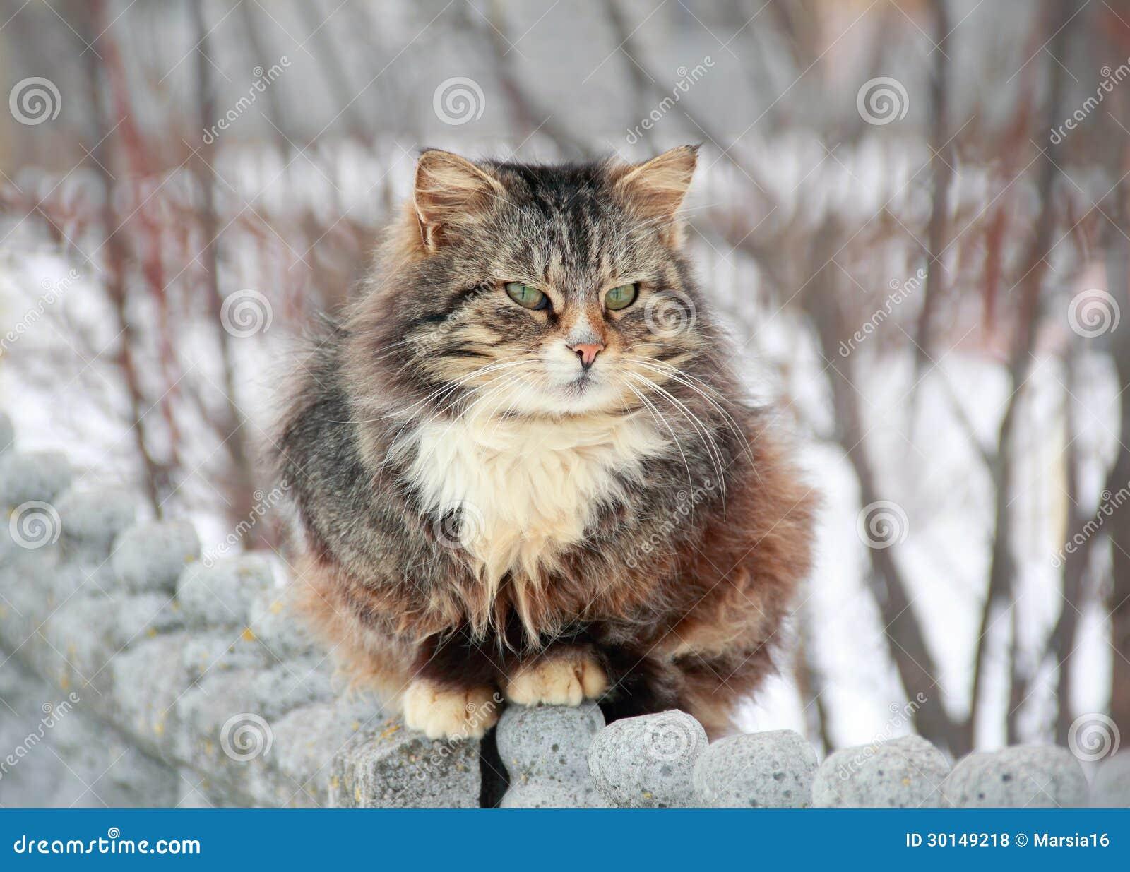 Кот в март на прогулке