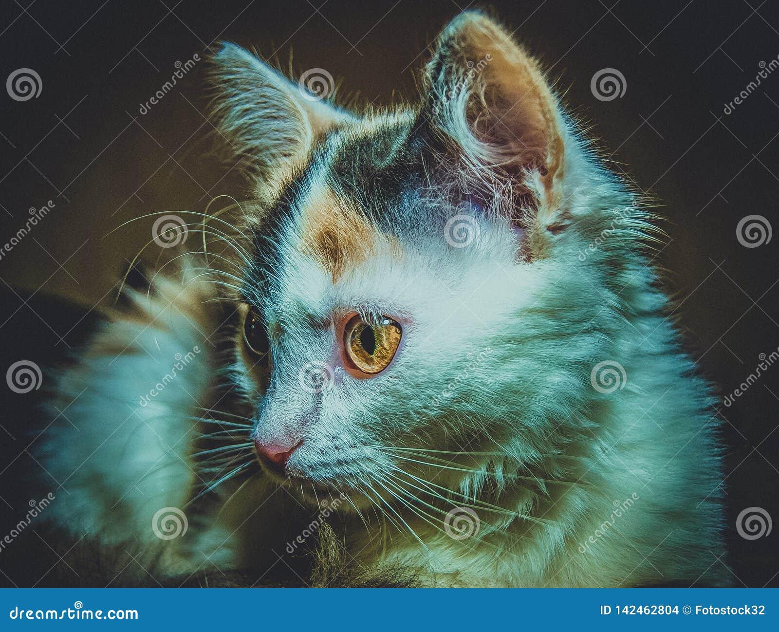 Tricolor kattunge för levande död