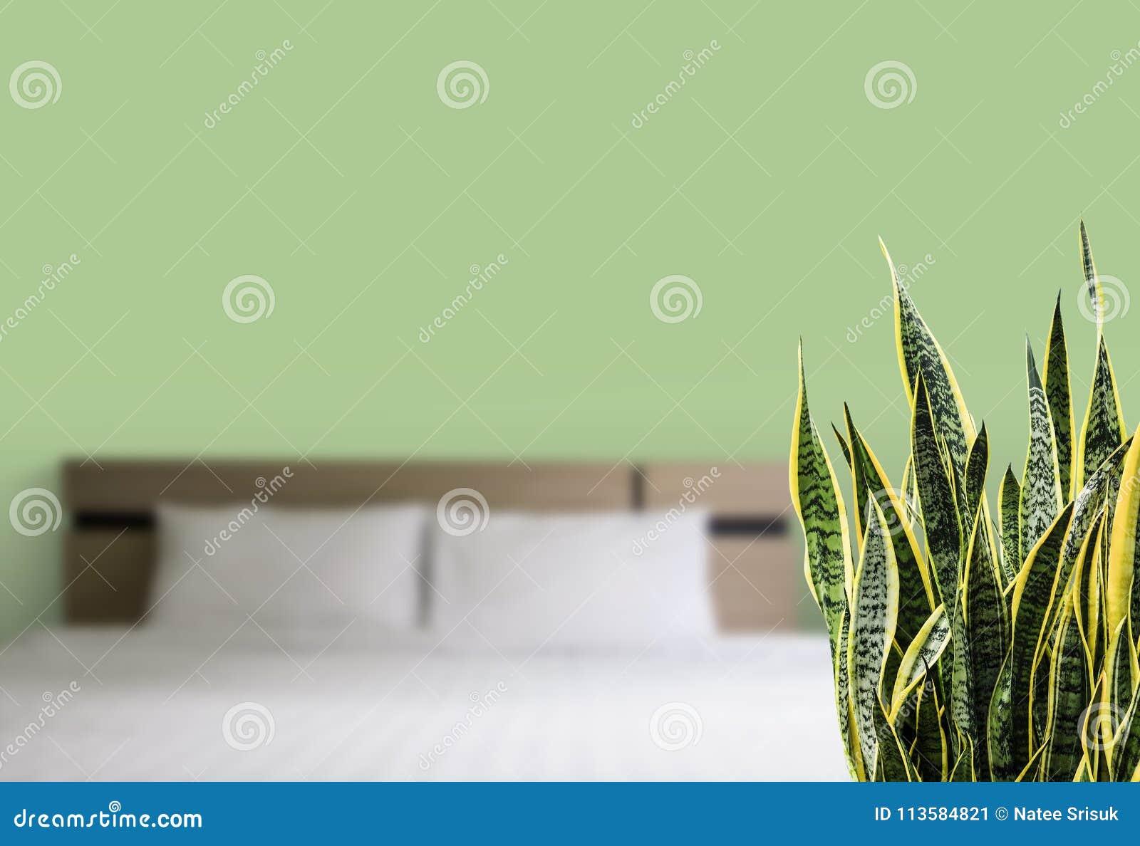 Trifasciata Di Sansevieria O Pianta Di Serpente Nella Camera Da Letto Immagine Stock Immagine Di Naughty Verde 113584821