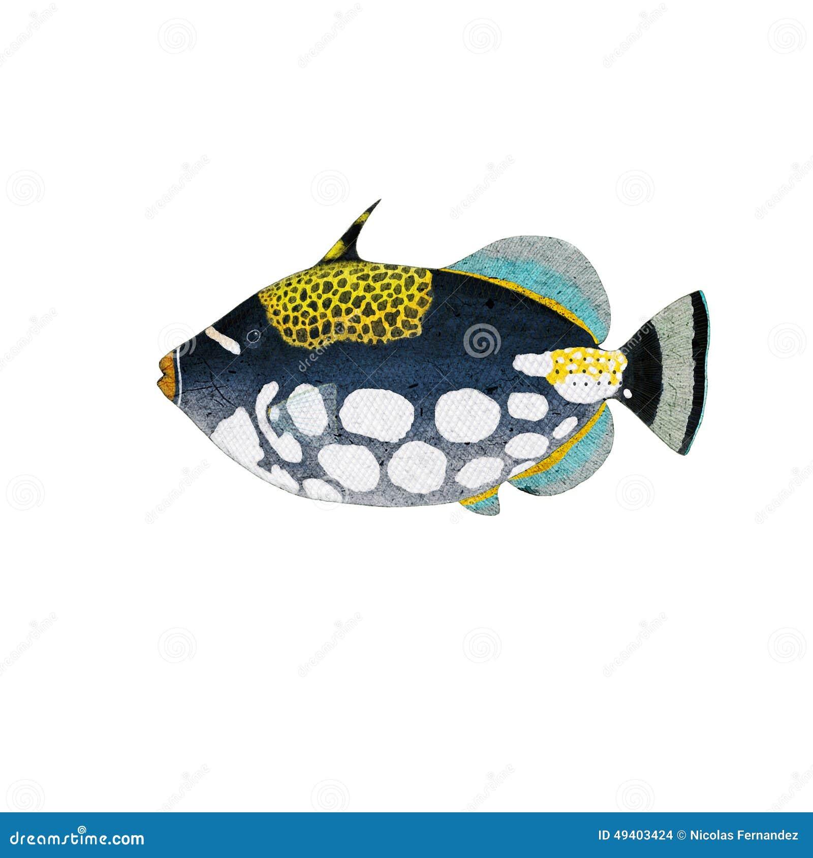 Download Triggerfish stock abbildung. Illustration von wasser - 49403424