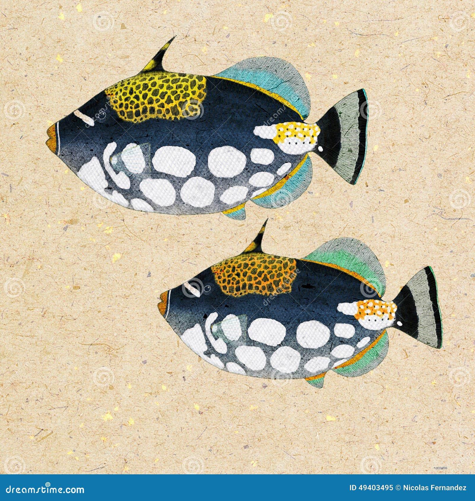 Download Triggerfish stock abbildung. Illustration von meer, aquarium - 49403495