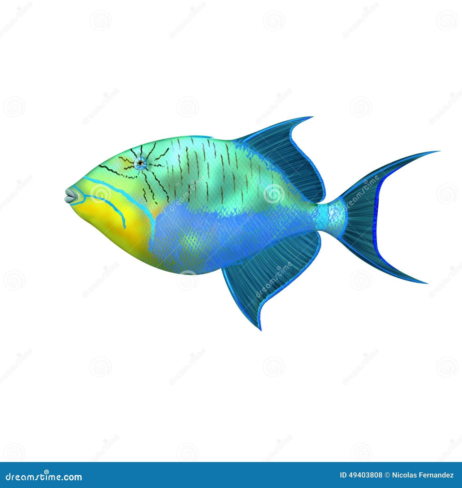 Download Triggerfish stock abbildung. Illustration von becken - 49403808