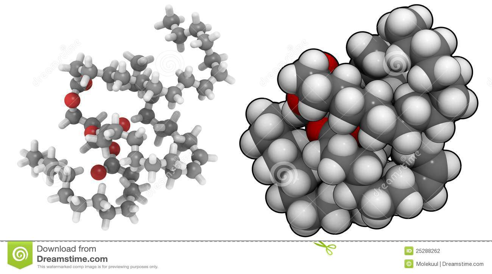 Triglyceride (gordura animal)