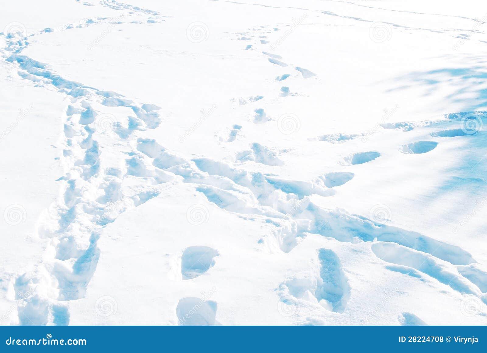 Trilhas animais na neve