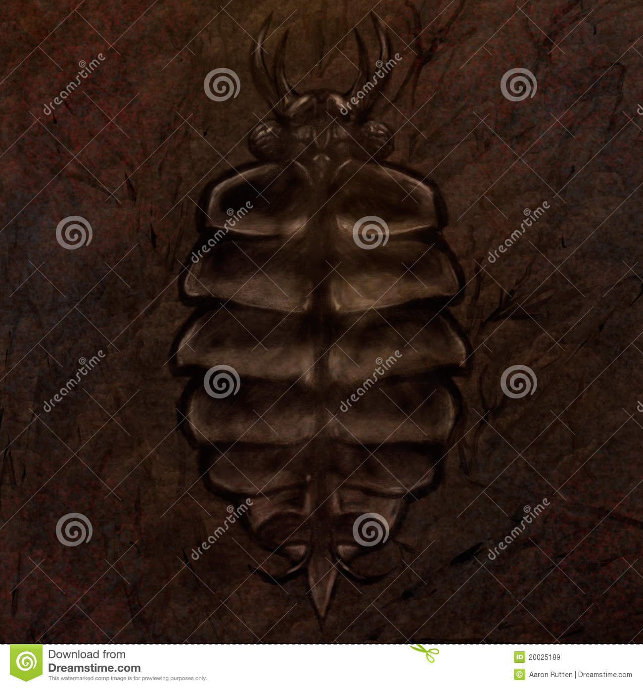 Trilobite Fossil IllustrationTrilobite Illustration