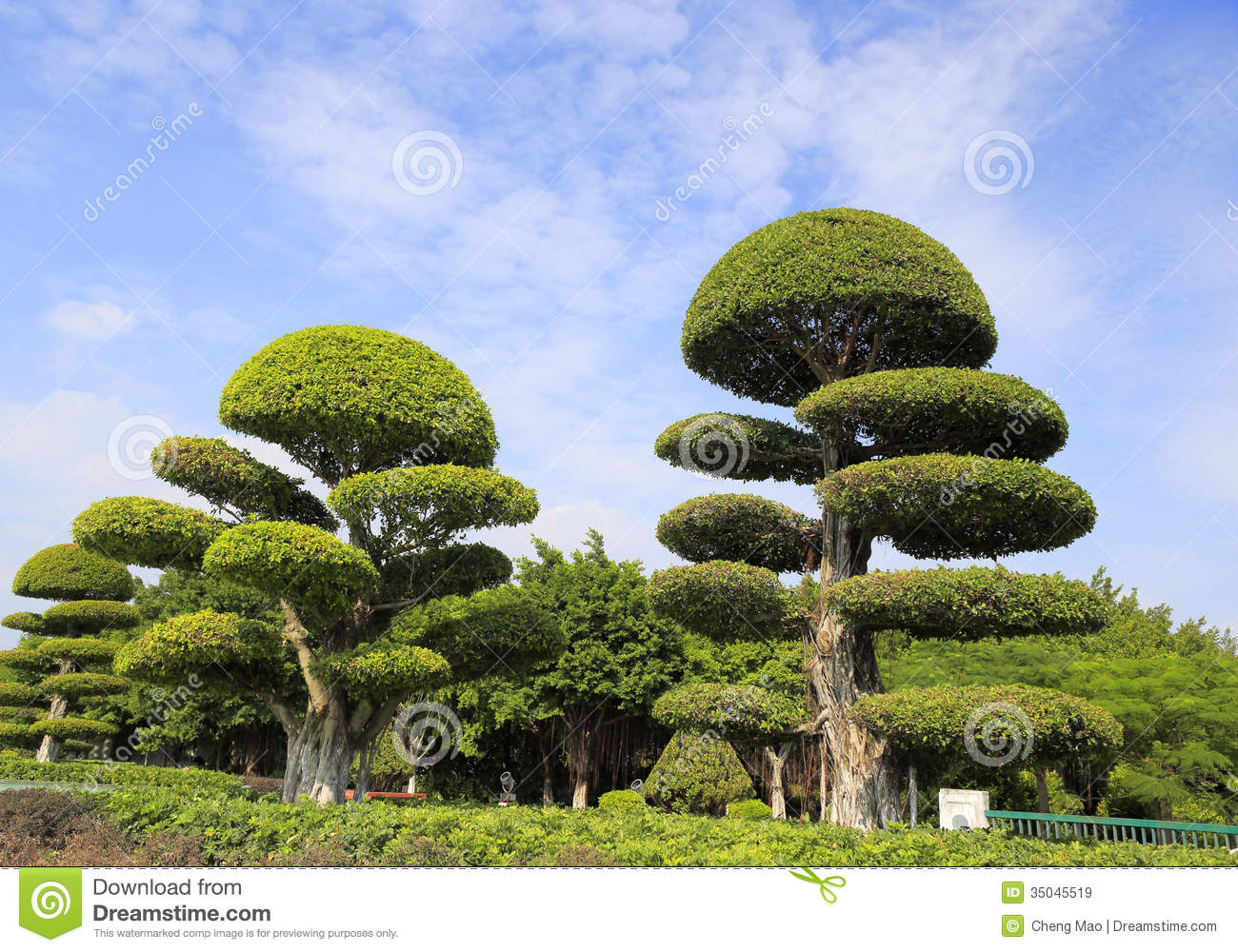 Royalty Free Stock Images Trimmed Banyan Tree Under Blue Sky Image35045519 on Tropical Ornamental Trees