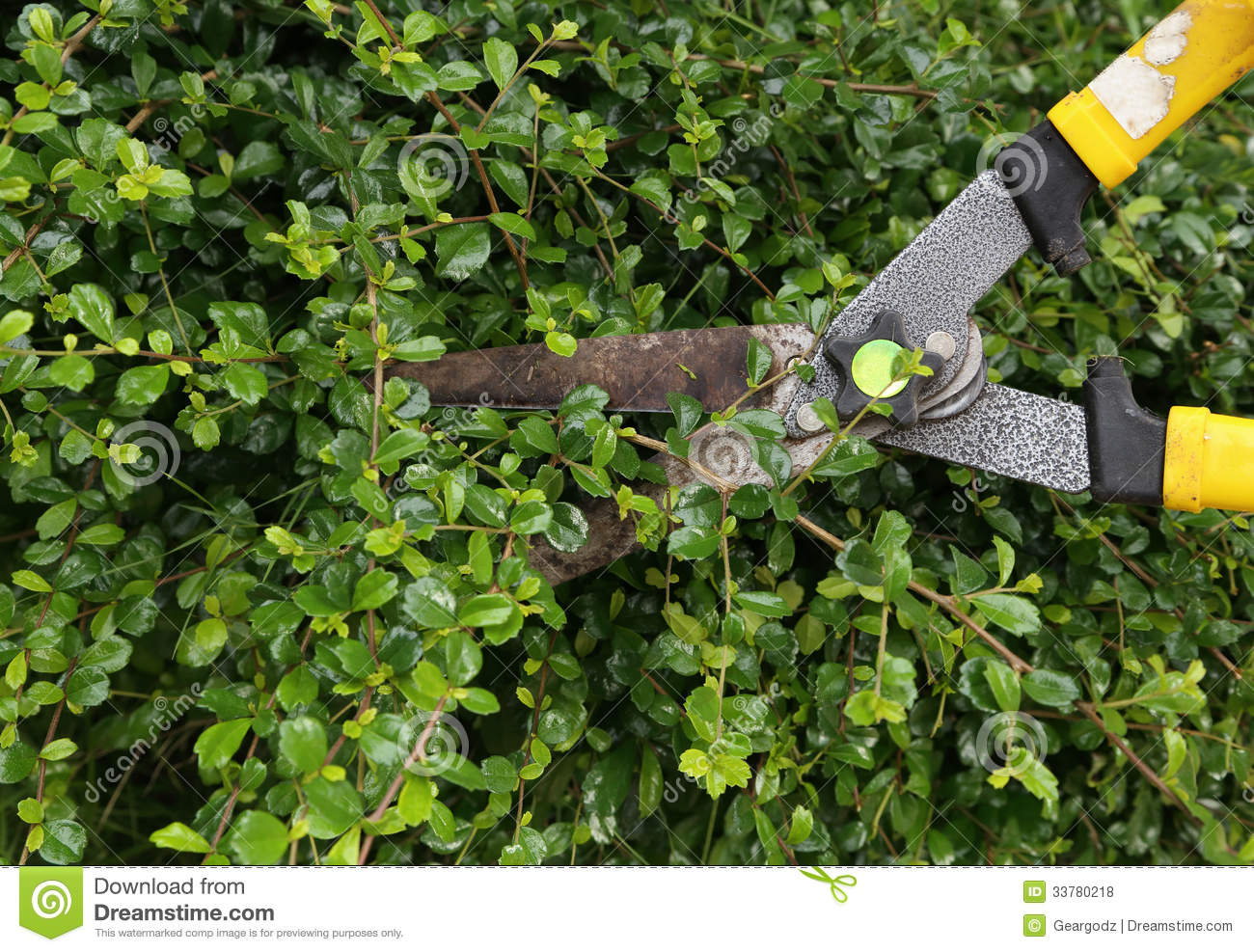 Trimming Bushes With Garden Scissors Stock Photo Image 53400946