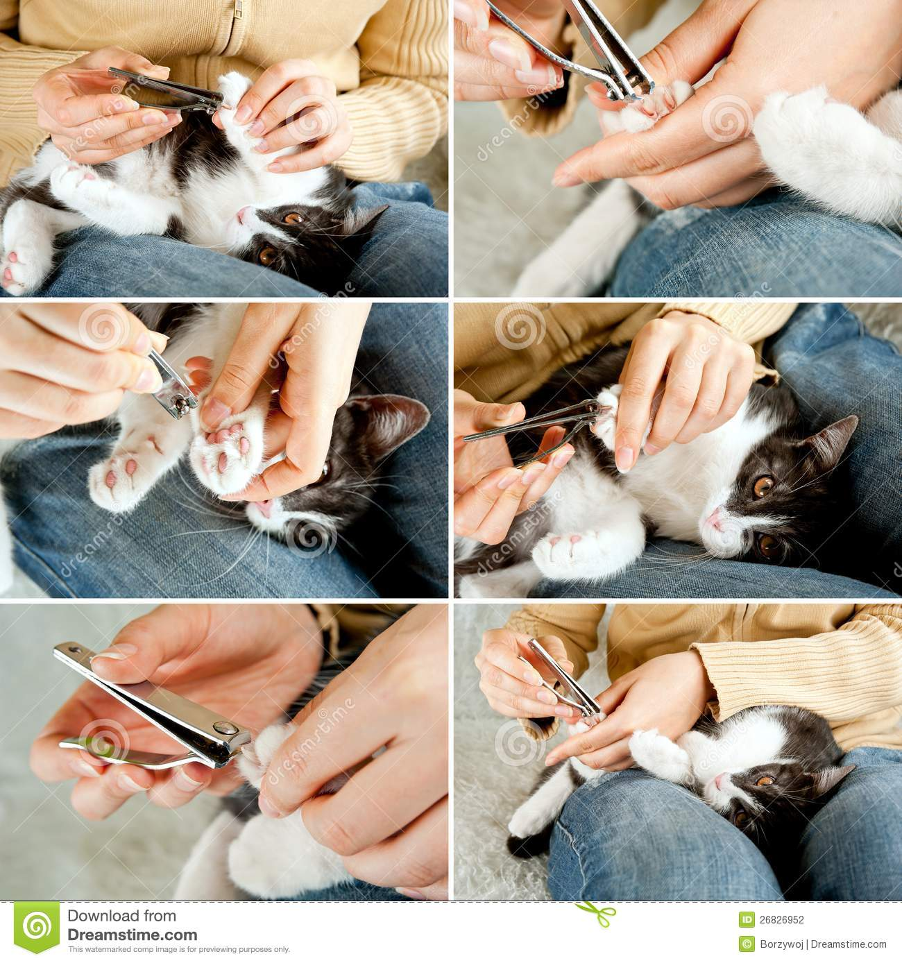 Trimming Cat Nails Stock graphy Image