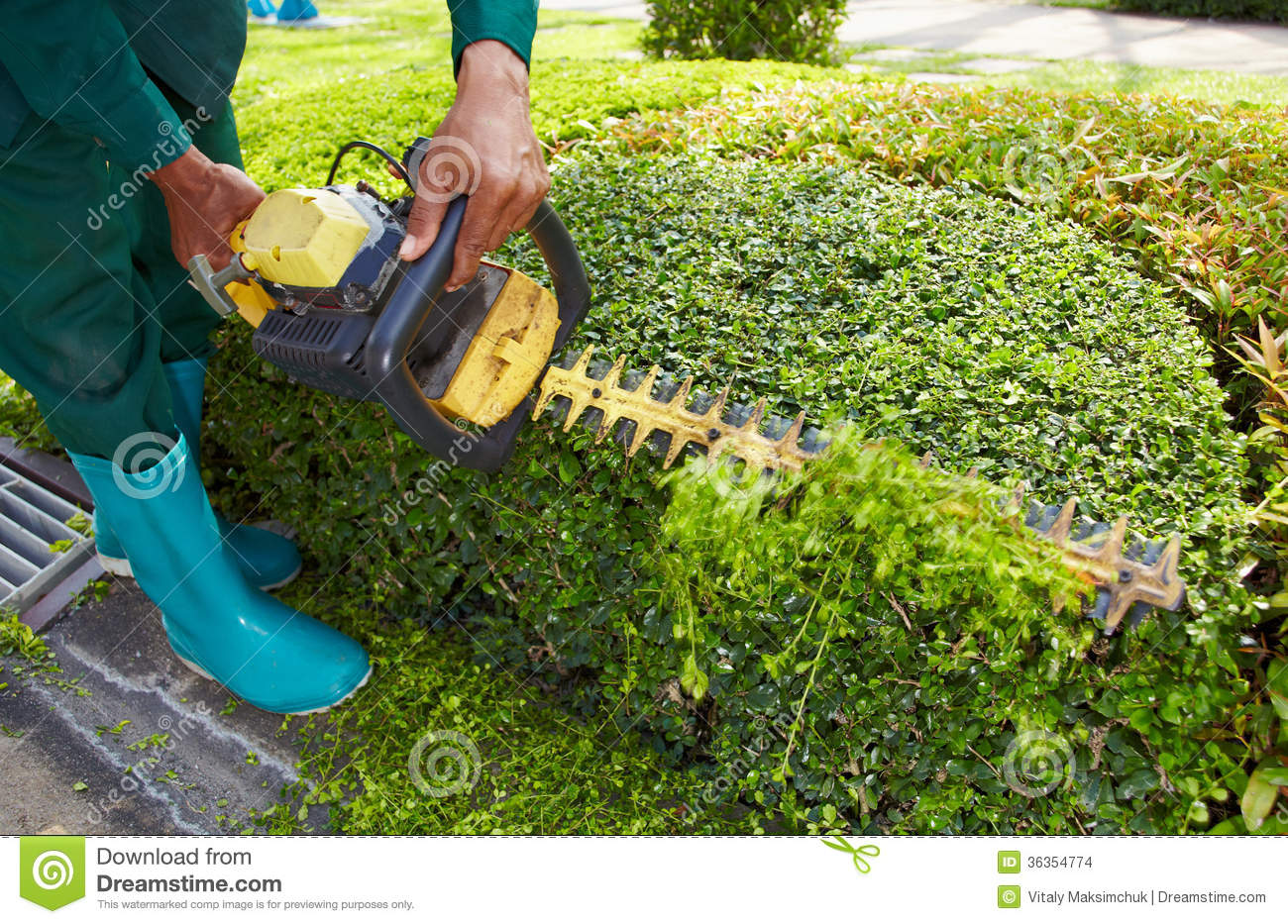 Trimming garden stock images image 36354774 for Gardeners trimming tool