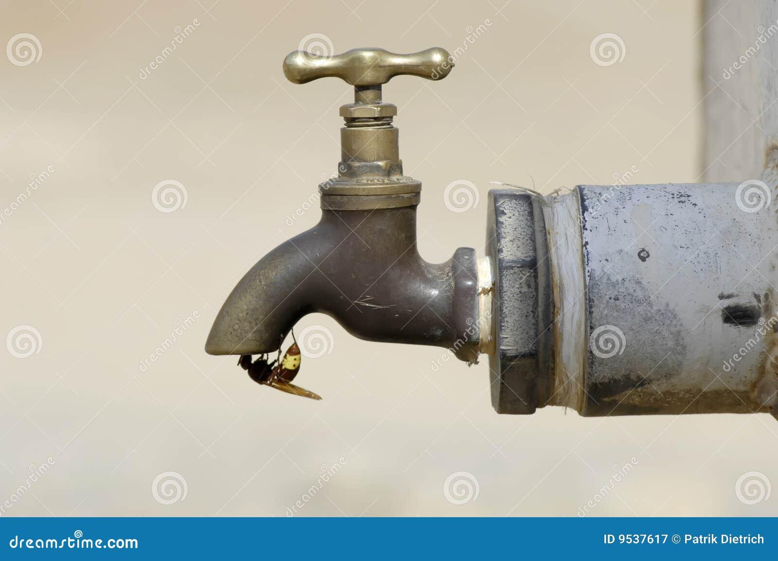 Trinkwasser der Honigbiene an einem Hahn