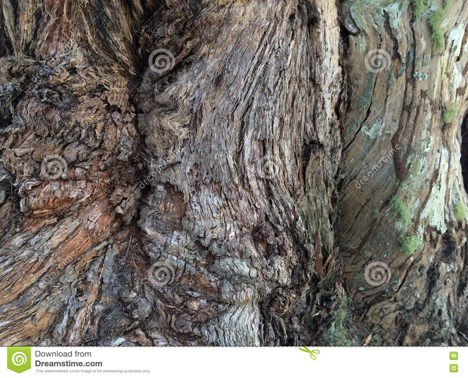 Trio av texturerade trädstammar