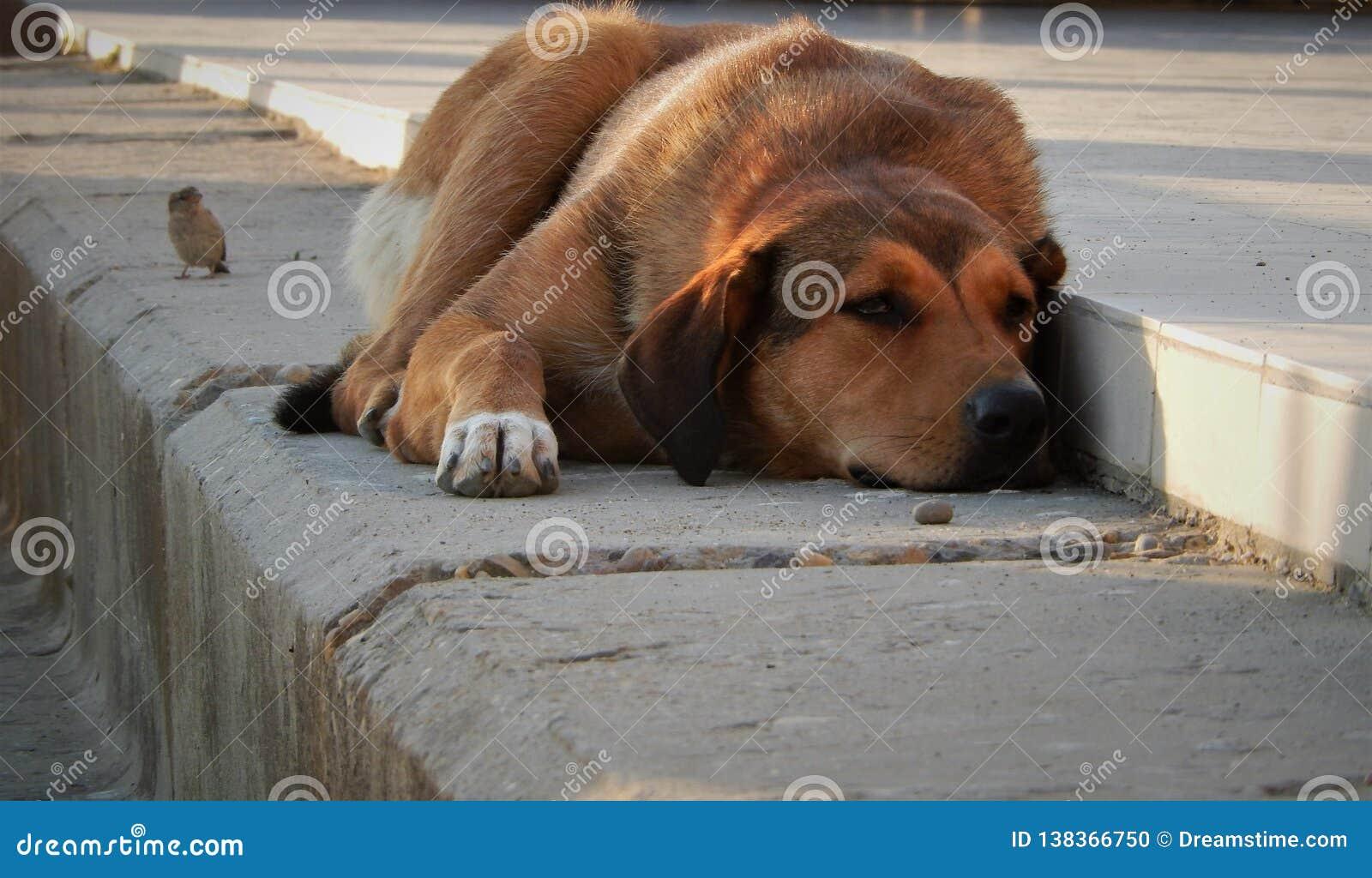 Tristesse d oiseaux de chien