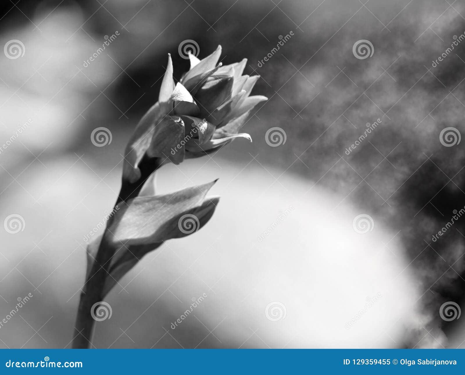 Tristesse Et Solitude Tristesse Et Solitude Noires Et Blanches Image Stock Image Du Solitude Noires 129359455