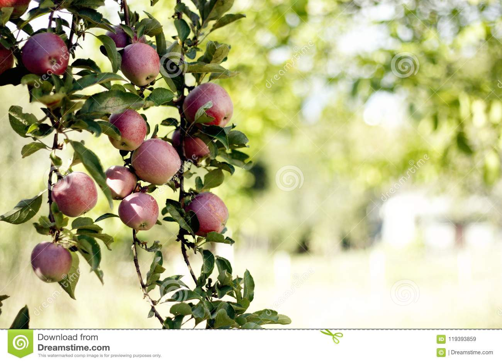 Triture a maçã